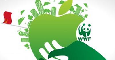 Apple WWF - The Scoop on the Apple 6s
